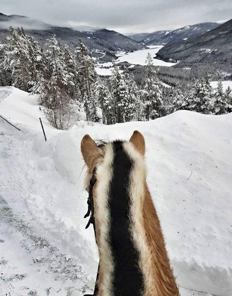 Fin dag: På tur med fjordhesten. Foto: Marit R. Marstein