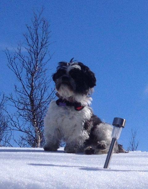 Milli (8) har vært savnet i snart to uker.