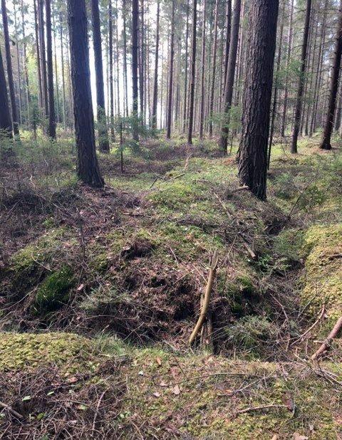 Päivi Hilska har tatt dette bildet av fordypningene som er rektangulære og ca. 8x8 meter store. De ligger på oversiden av hulveiene ved Kalnesbrekka. Men hva er det spor etter, spør hun.