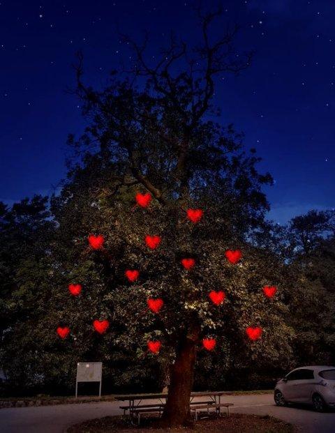Denne illustrasjonen er det som er utgangspunktet for det første treet de vil lyse opp i Sandvedparken.