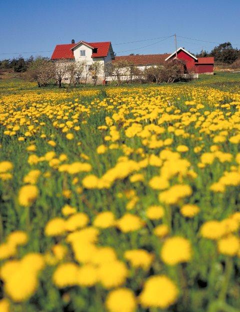 BOSATT PÅ LANDBRUKSEIENDOMMER:: Dagens statistikksak tar for seg den årlige oppdateringen på antall landbrukseiendommer i norske kommuner, og hvor mange personer som bor der.