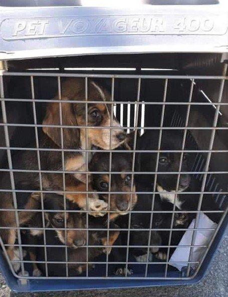 STRIPSET: Dyrebeskyttelsen i Mandal skriver på Facebook at buret til hundene var stripset fast.