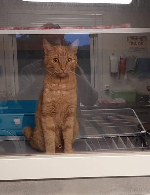 BLINDPASSASJER: Katten Max har vært på eventyr.