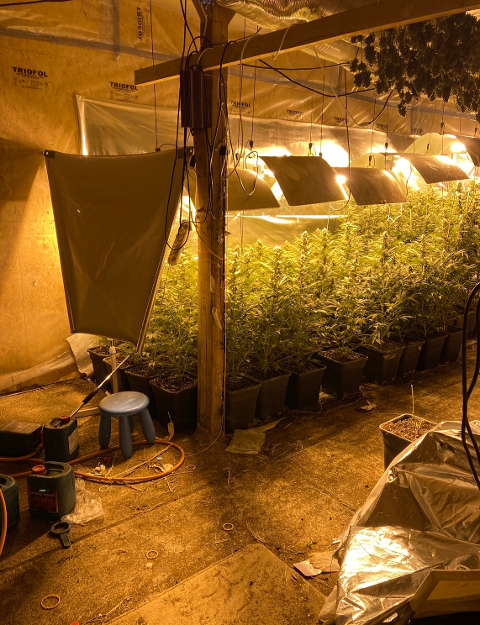 Ulovlige planter: To menn er siktet etter at politiet avdekket cannabis-plantasjen i en lagerbygning i Rakkestad.