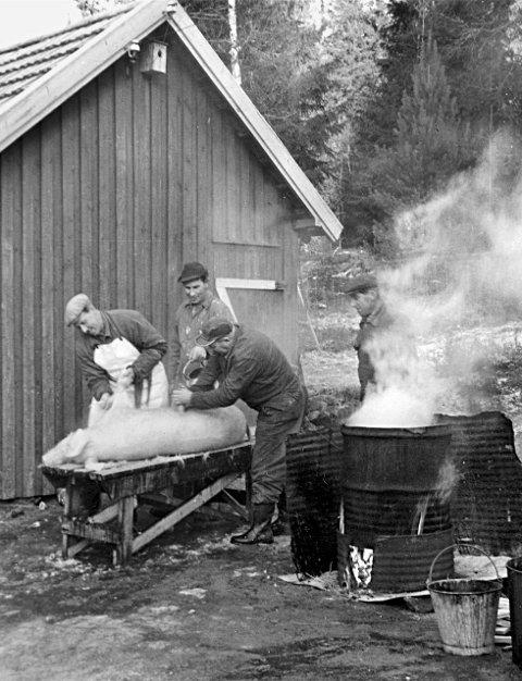 Skålding: En av julegrisene hos Johan Bakken på Åbogen i ferd med å bli julemat. (F.v.) Gunnar Bakken (store-Gunnar) renser bein og labber. Johan Bakken sørger for riktig tilførsel av skåldevann. Gunnar Bottilsrud skraper bust, mens Leif Sundell (t.h.) følger nøye med.Foto: vesle-Gunnar (Bakken) i 1961.