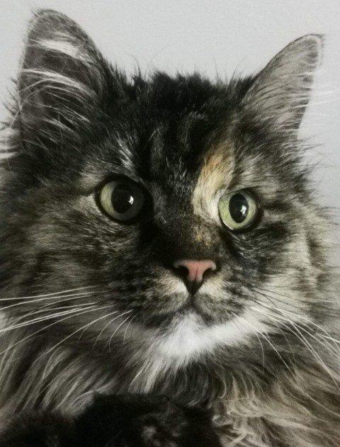 OVERLEVDE: Mira (13) ble påført blant annet en punktert lunge da hun ble angrepet av en ørn på Senja.