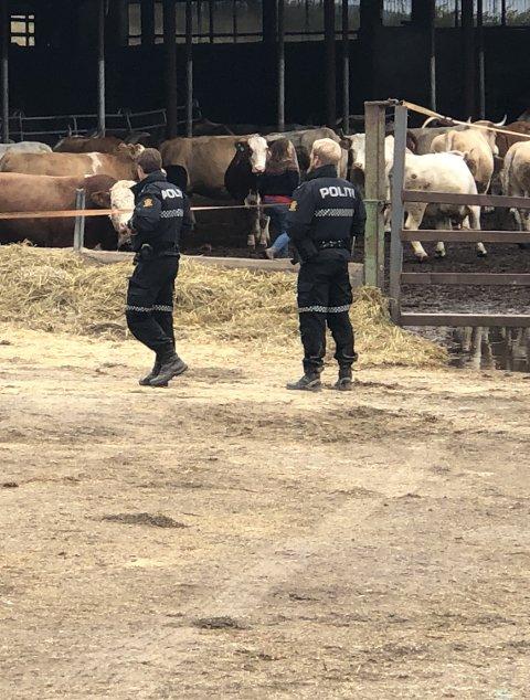 Avviklet dyrehold: Mattilsynet anklages for ikke å ha destruert alt kjøttet.