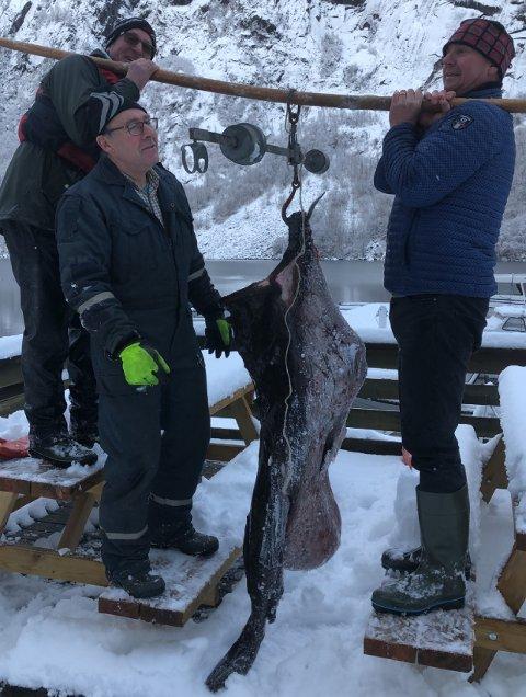 KVA VEG HAN TRU?: Det var Nils Rullestad (til venstre) som fekk 70 kilo breiflabb i garnet sitt. I midten ein annan ivrig fjordafiskar, Jørgen Lundal og til høgre Per Martin Kjellesvik, som har erfaring med å få store breiflabbar i Åkrafjorden.