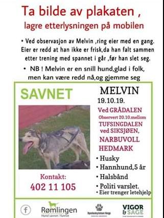 SLIK SER HUNDEN UT: Har du sett Melvin, eller har tips om hvor han befinner seg?