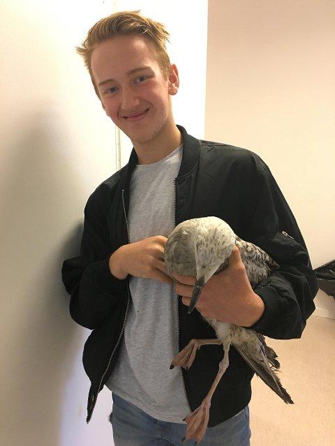 Andre Haga var svært glad for at dyrepleieren kunne hjelpe måkeungen.
