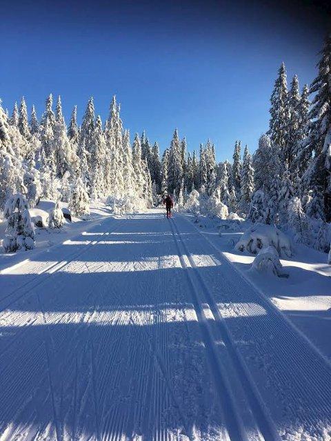 Vinteridyll: Forholdene ligger godt til rette for et vellykket Montebellorenn lørdag 18. februar. Foto: Stian Gran