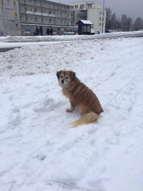 Politiet leter etter eieren av denne hunden på Bjørnemyr på Nesodden.