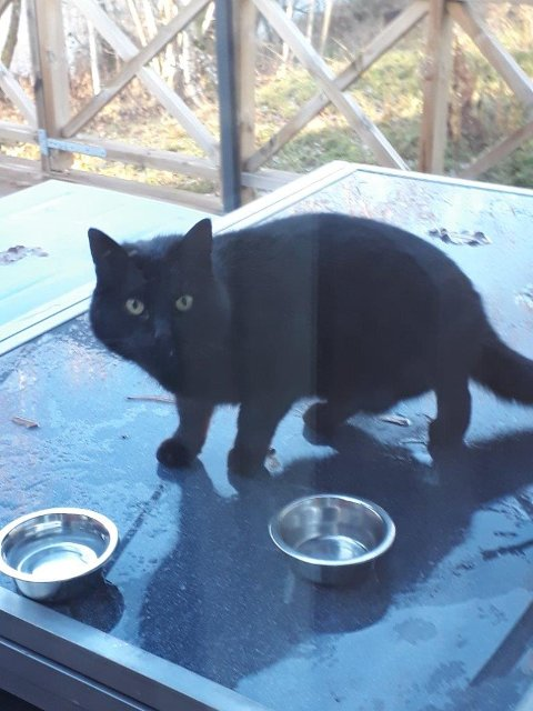 Det var i midten av novenber at den helsvarte katten først kom på besøk til Morten. Det gjorde han lurt i, for etter et par måneder fant han ut hvem som eide ham og nå er Batman endelig hjemme igjen.