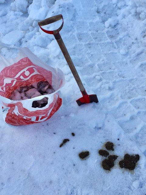 Finn Olav Holten i Granheimlia i Ås er lei av å måtte spa hundedrit.