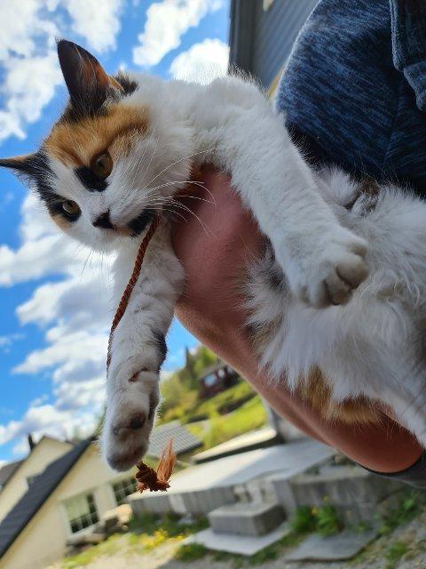 EKKELT: Søndag bandt noen en løkke rundt halsen til katten Panda. I dag ble den funnet død med stikkskade.