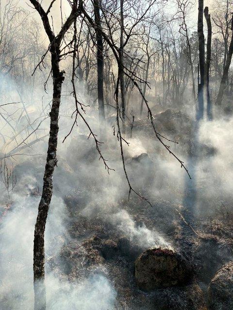 SVIDD: Rundt 800 mål har gått med i brannen.