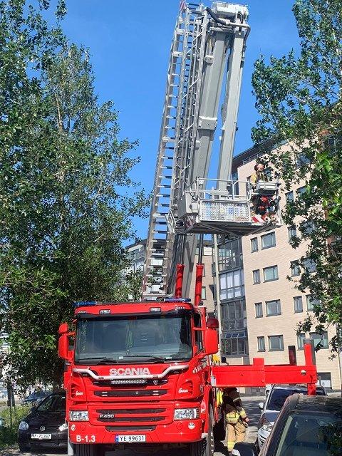 Salten Brann Bodø fikk reddet kråka ned fra treet.