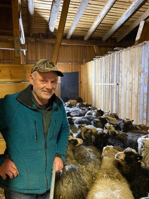 GLAD BONDE: Arvid Mæland er gjenforent med sauene sine.