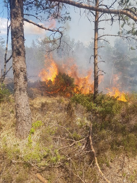 SKOGBRANN: Brannvesenet arbeider med å få slukket brannen.