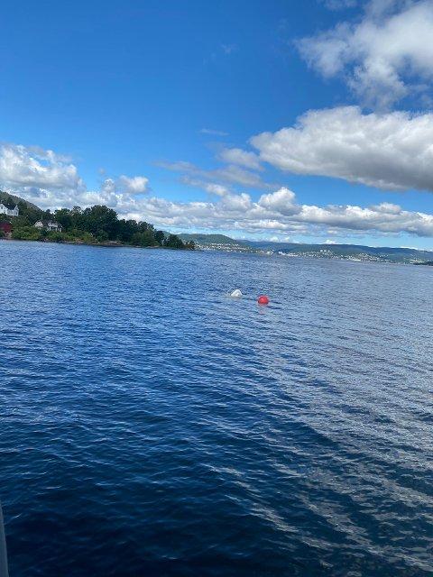 REDNINGSAKSJON I DRAMMENSFJORDEN: Redningsselskapet la ut melding på Twitter etter at det hadde hjulpet til med å heve denne båten som hadde sunket ved Tangen fjordpark natt til lørdag.