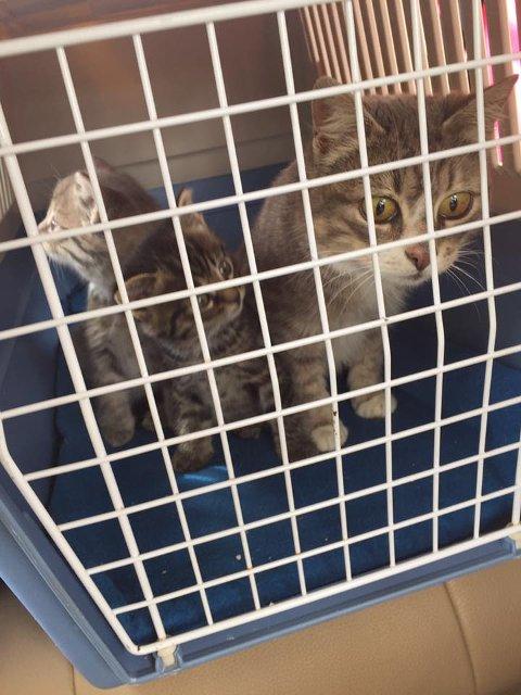 FAMILIE: Denne kattefamilien blir ikkje tatt hand om av eigarane, og er her på veg til Dyrebeskyttelsen.