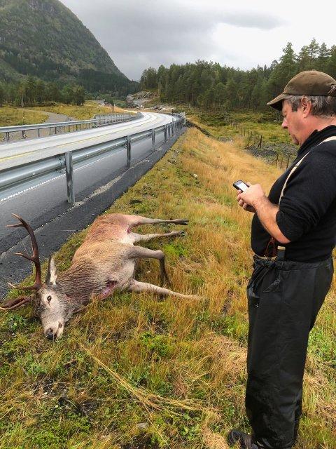 FANGA: Denne sat fast i gjerdet med broten fot og måtte avlivast. Thorolf Magnesen (til høgre) var ein av jegerane som fann hjorten.