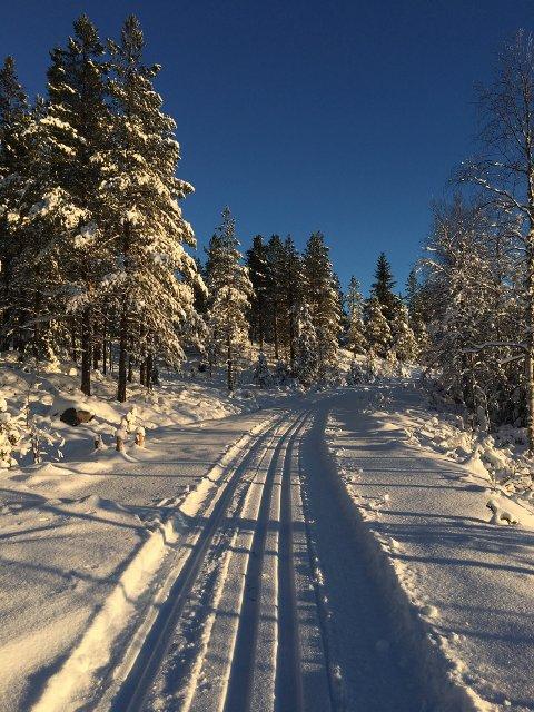 SKIFØRE: Nysnø, sol og kuldegrader kan friste mange til å ta en pause fra julestress og ta en tur ut på ski i helga. Det gjelder å nyte vinteren så lenge det varer.