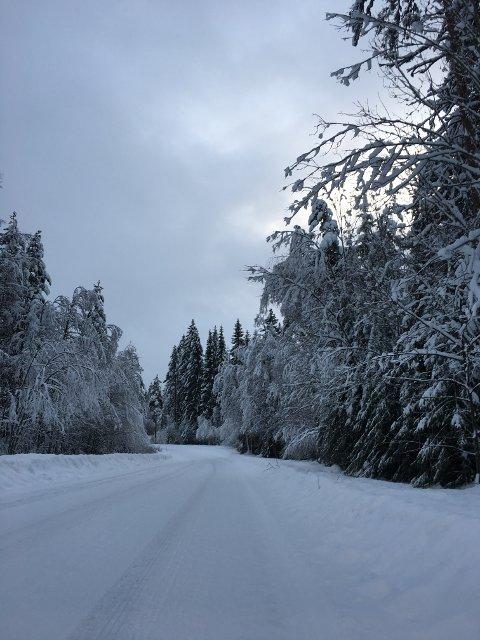 VINTERLAND: Det er store snømengder i høyereliggende strøk, og skogen tynges av snøen. Bildet er tatt i Hof Åsa.