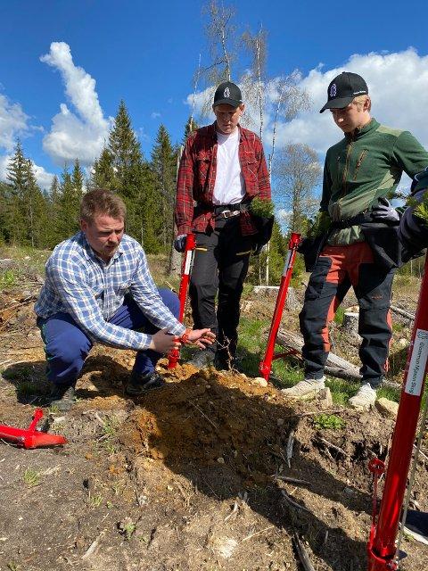 Ivar Eriksmoen har tatt på seg jobben med å lære Andreas Moberget og Oskar Kvesetberget hvordan granplantene skal plantes på beste måte. Han følger også opp plantørene i det daglige arbeidet.