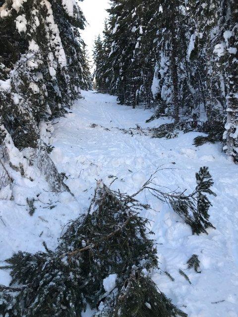 HINDER: Trær og kvister hindrer løypemannskapene å komme frem. Bildet er fra Rønningen på Vardåsen.