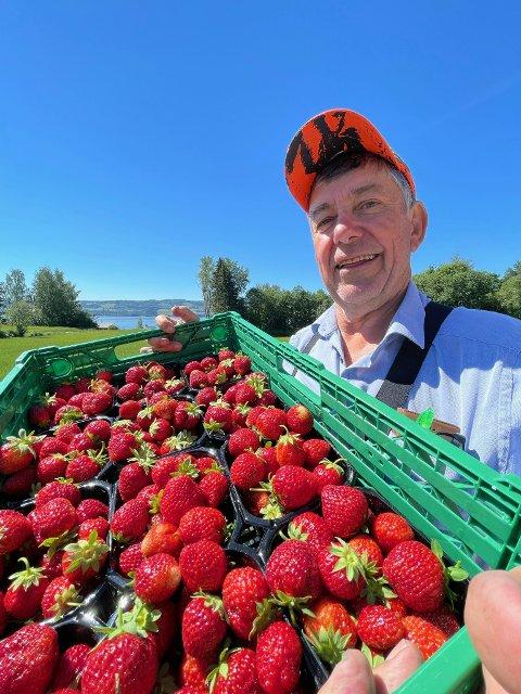 Ørnulf Austdal i Ringsaker ser rødt på rødt på åkeren. Han kan sende kassevis med søte Corona-bær ut til butikkene.