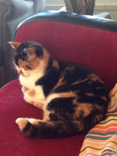 Denne katten er savnet fra Dæhlinvegen i Lunner.