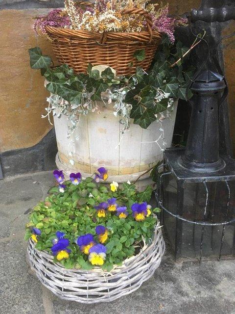 VÅR I NOVEMBER: Denne blomsterprakten fargelegger fortsatt trammen hos Solfrid Grymyr på Jaren.