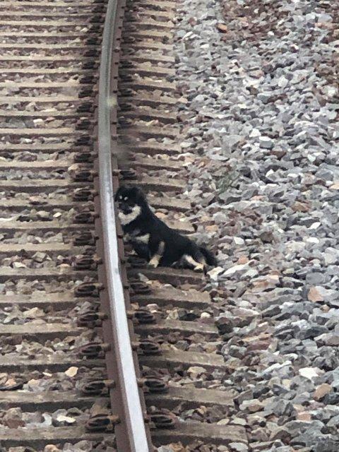 LANGS SKINNENE: Flere personer prøvde i løpet av ettermiddagen og kvelden å få tak i hunden, men den løp unna hver gang. Den likte seg best langt togsporet, noe som kan være farlig for både to- og firbeinte. Bildet er tatt av en leser.