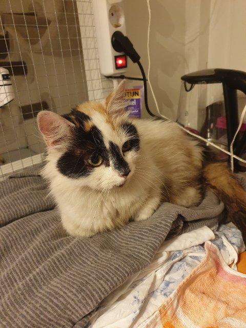 BLIR OPERERT: Denne kattejenta blir operert torsdag morgen etter medfarten hun fikk i Lunnertunnelen.