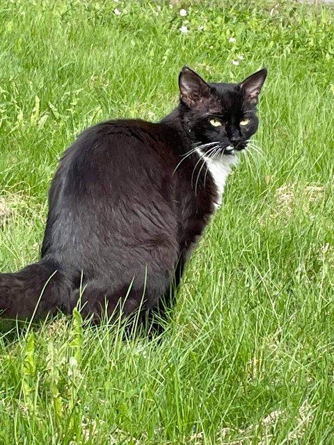 TRENGER HJELP: Dyrebeskyttelsen trenger hjelp til å lokalisere en syk/skadet katt på Roa.