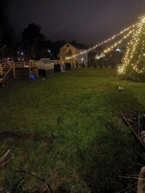 På bildet ser du juletreet som Mikkelsen sier tyvene prøvde å ta ned. Da de ikke fikk det til, valgte de å ødelegge lyslenkene på treet og langs gjerdet. Nå har Mikkelsen fått fikset store deler av lysene, men det er fortsatt en lyslenke som er ødelagt.
