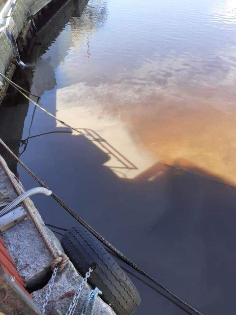 FRA INDRE HAVN: Avføring og papir i vannet.