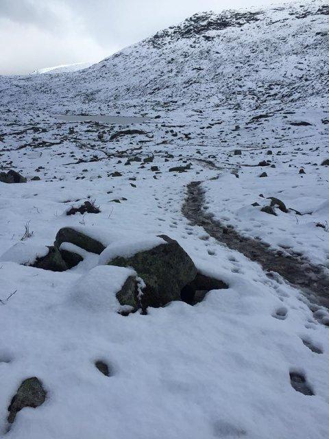 Slik såg det ut på fjellet på veg til Trolltunga fredag.