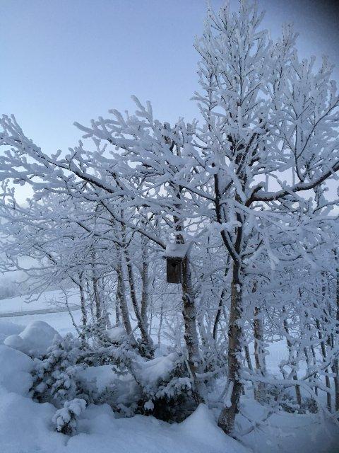STILLE: 23 minusgrader og vindstille er status på Vågslid klokken ni fredag morgen. I helgen skal det blåse opp.