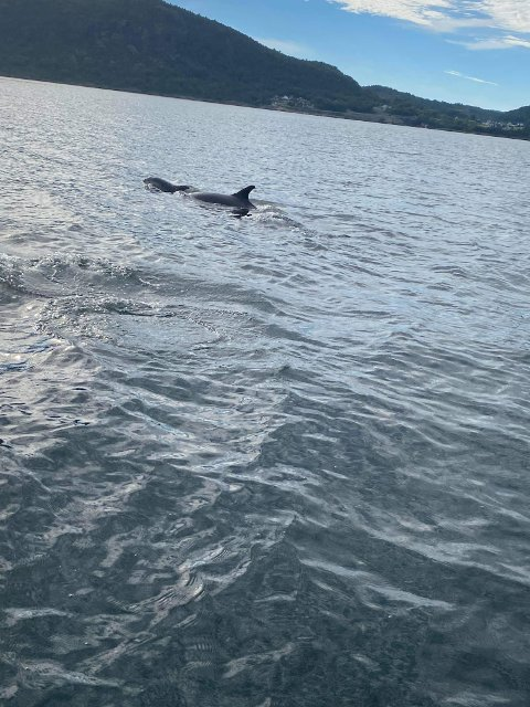 FINT SYN: Fisketuren bød på en ekstraordinær opplevelse for familien Nielsen Hervik fredag.