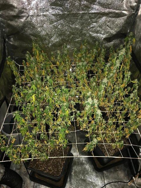 BESLAGLAGT: Politiet kom over disse plantene i en bolig.
