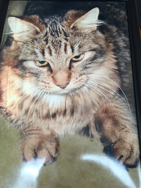 Katten er savnet fra Bjørkelangen