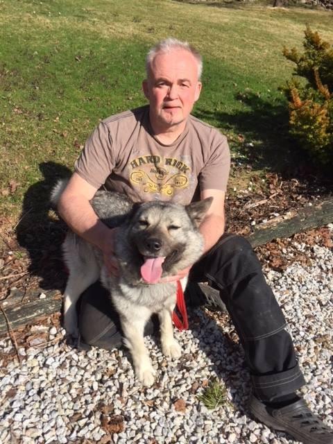 Alf Villy Nordlie plasserer elghunden Dixi hos en kamerat i Gausdal. – Dixie skal få lov til til å leve livet sitt slik hun elsker det, nemlig å kunne løpe fritt å kunne jage elg, sier jegeren fra Hemnes. Foto: privat