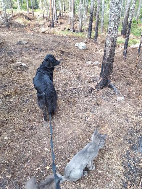 NÆRE PÅ: Hytteeier Grethe Myrheim som gikk brannvakt ved Oppsjøen sammen med hunden og katten sin, har tatt dette bildet ved hyttefeltet på Tangen på Søndre Mangen.