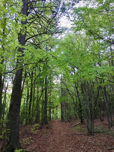 Løvskog bidrar til økt biodiversitet