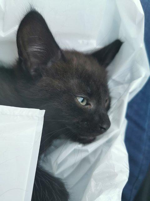 BRUKKET RYGG: Den lille kattungen var i live da den ble funnet, men ble avlivet på dyreklinikken i Eidsvoll senere samme kveld. Foto: Privat
