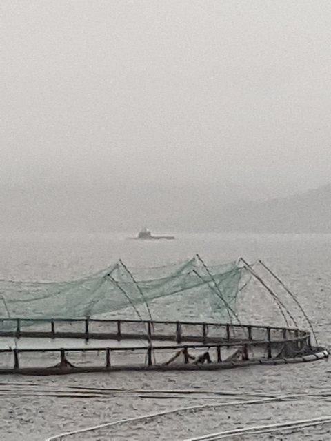 Onsdag ettermiddag kan ein sjå ubåt i Husnesfjorden. (Foto: Kvinnheringen-tipsar).