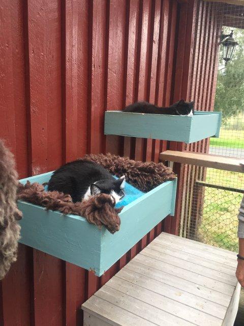 Noen av de midlertidige beboerne på kattehuset (som trenger er kjærlig hjem)