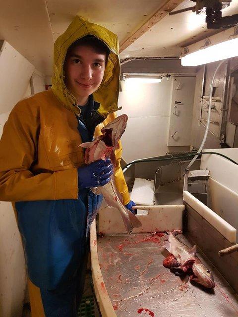 FORØYD: Her er Johan i gang med fangstbehandlingen som var en del av fagprøven.